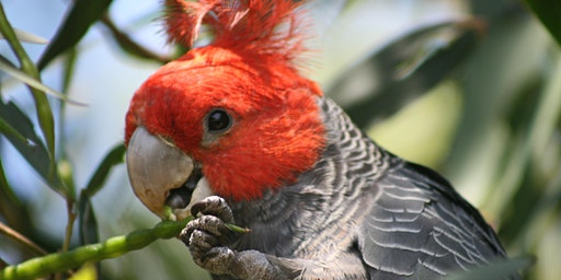Junior Rangers Bird Brain - Grampians National Park