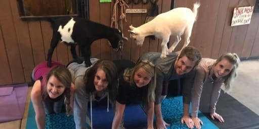 Valentines Day Wine & Goat Yoga Class: February 15th