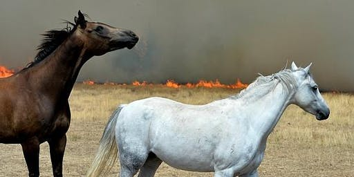 Horses and Bushfires Safety Workshop - event postponed to Thu19th Dec