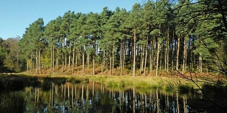 Early Summer Forage in Delamere Forest tickets