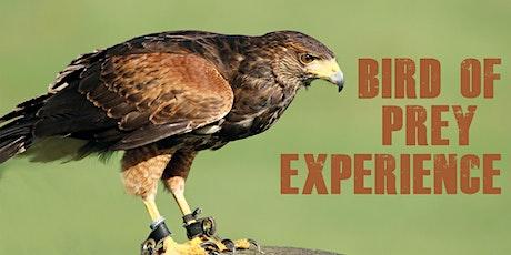 Bird of Prey Experience tickets