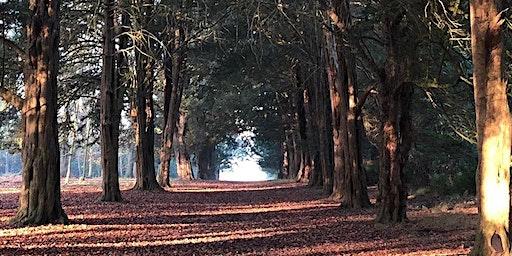 Winter Solstice Walk