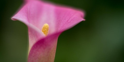 Capture to Print: Flowers and Macro