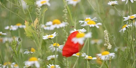 Green Infrastructure for Pollinators Workshop tickets
