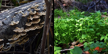 Plants and Mushrooms Walk (Edible and Medicinal) tickets