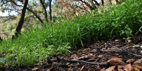 Eco-Friendly Foraging - Plants Walk / Food & Drinks tickets
