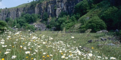 Spring Flowers and Birds walk at Millers Dale
