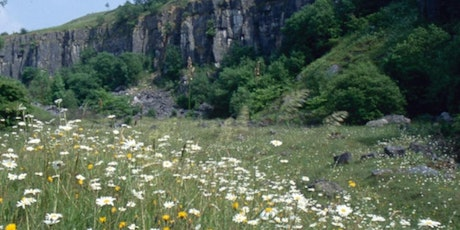 Spring Flowers and Birds walk at Millers Dale tickets