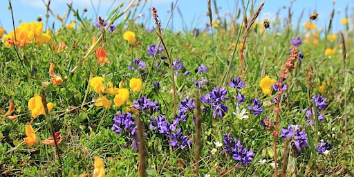 Mountain Pansies and Spring Flowers at Gang Mine