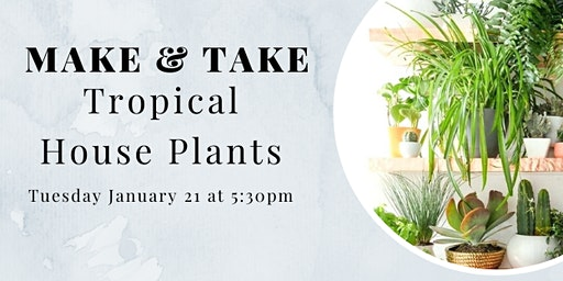 Make and Take Tuesday: Tropical House Plants