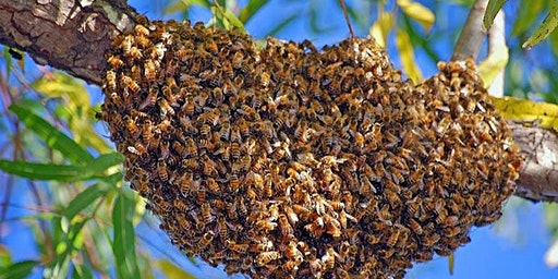 Swarm Prevention (Beekeeping)
