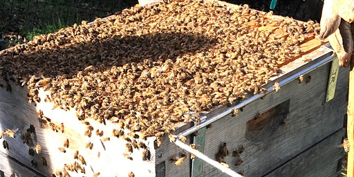 Spring Management of Your Beehive