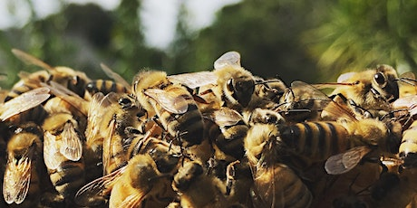 Honeybee Behavior (or Why Did My Bees Do That?) tickets