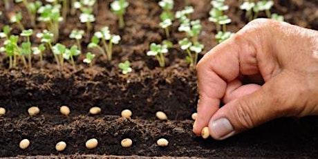 Jardinage écologique1: les semis à l'intérieur tickets