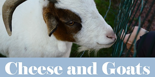 Goats and Cheese Workshop