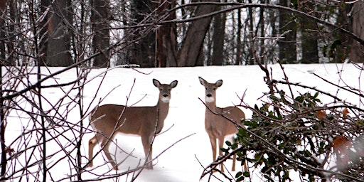 Interpretive Hike: Iroquois Park Winter Nature Walk