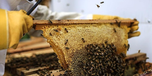 Beginning Beekeeping: What's the Buzz All About?