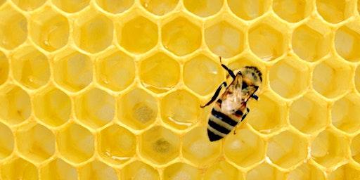 RobEEs Honey Gardens