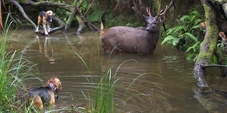 Hound Hunting Test - Ballarat tickets