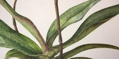 Beginners art class in the beautiful world of botanic illustration tickets