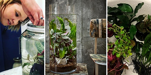 PLANT YOUR OWN AQUATIC LANDSCAPE