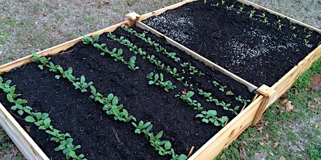 Raised Bed Gardening 101 (Part of Seven Days of Local Delights) tickets