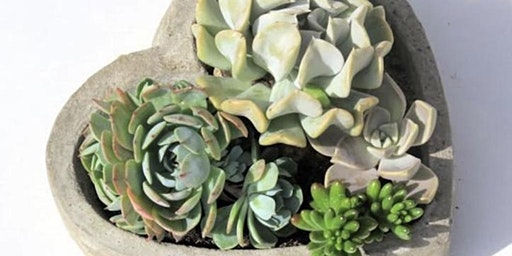 Galentines Day Succulent Planter  Workshop at Aftermath Cidery