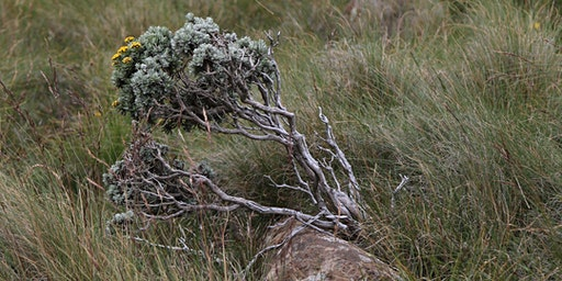 Steppe Plants for the Rock Garden