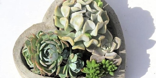 Valentine's Succulent Planters  at Running Vines