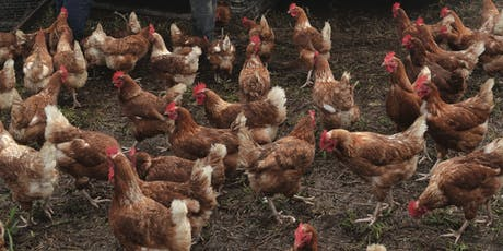 Small Scale poultry keeping workshop tickets