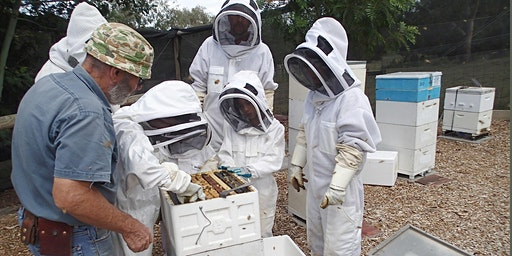 Collingwood Children's Farm Apiary (Sunday 15th December 2019): Hive Inspections