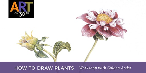 How to Draw Plants with Golden Working Artist, Nancy Seiler