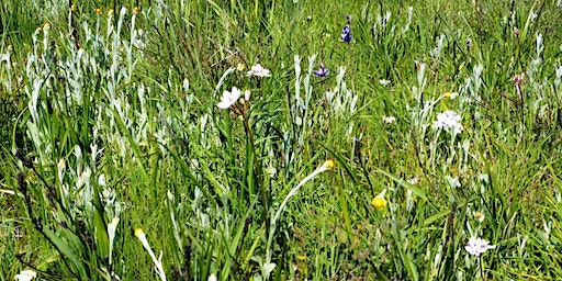 Introduction to the grasslands of western Melbourne