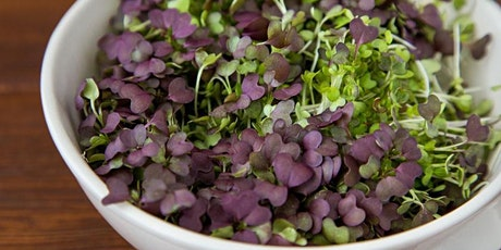 Microgreens and Sprouts Workshop tickets