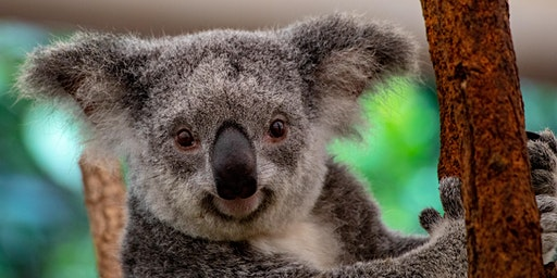 NYE INTENTION-SETTING (KOALA FUNDRAISING) WORKSHOP with KATIE and KEITH