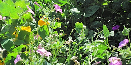 Companion Planting in the Garden tickets