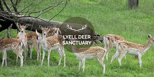 Christmas at The Lyell Deer Sanctuary Session 3