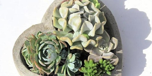 Valentine Succulent Planters at Goblin & The Grocer