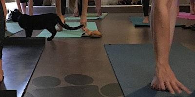 Yoga + Kittens at APA