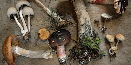 Mushroom Cultivation: A Workshop Tor The Myco-Curious