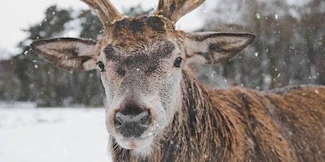 2019 Reindeer Romp 5k & 10k tickets