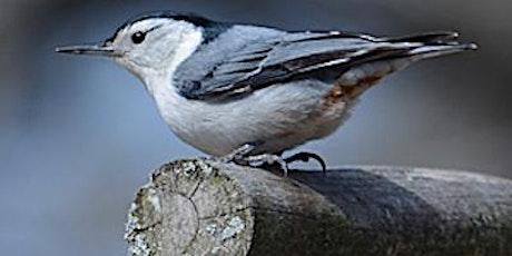 Birding Bles Park tickets