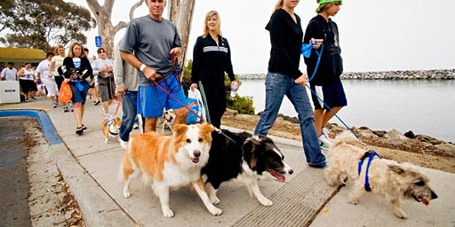 Paws on The Promenade - 2 February 2020
