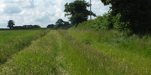 Get to know your Hedgerows and Farmland Birds!