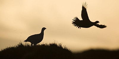 Grouse and Burgundy - Food and Wine Dinner