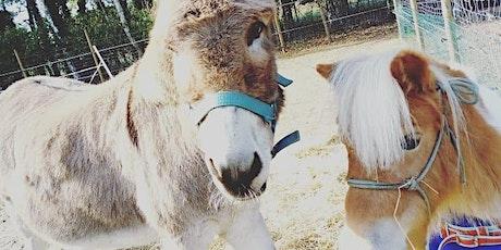 Lotgenoten ontmoetingsmoment 'ontspanning tussen de dieren' tickets