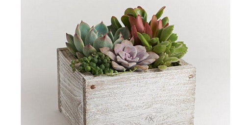 Succulent Garden with Alice's Table.