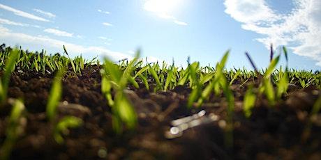 Jardinage écologique 4 : l'entretien du potager billets