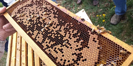 2020 Beekeeping Workshop #1: Package Installation  tickets