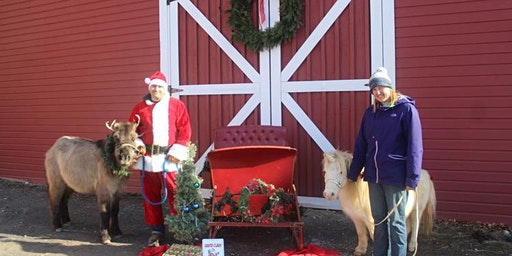 Take your own photos with a unicorn, reindeer pony and antique sleigh